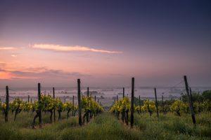 bodegas y vinos mosela asturias