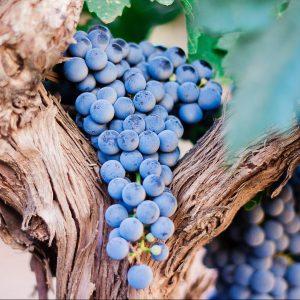 distribucion de vinos mosela asturias