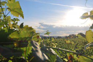 viñedos de mosela tienda de vinos