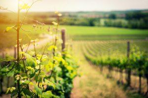 vinos en primicia asturias mosela en primeur