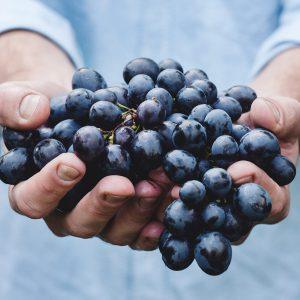 los mejores vinos mosela asturias