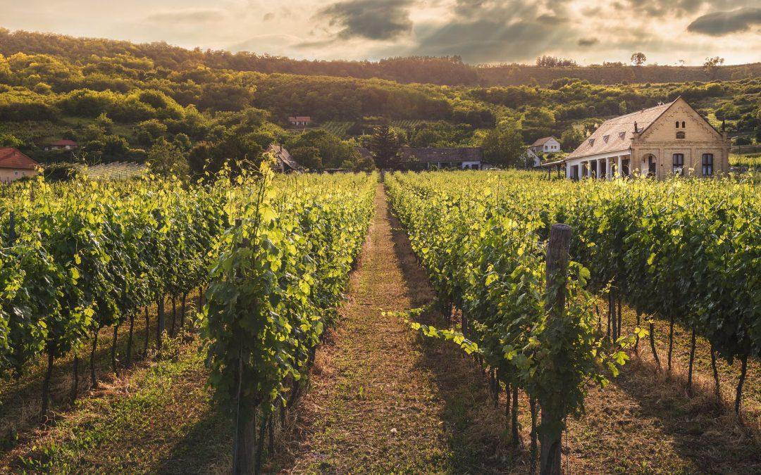 Cinco películas sobre vino para pasar la cuarentena