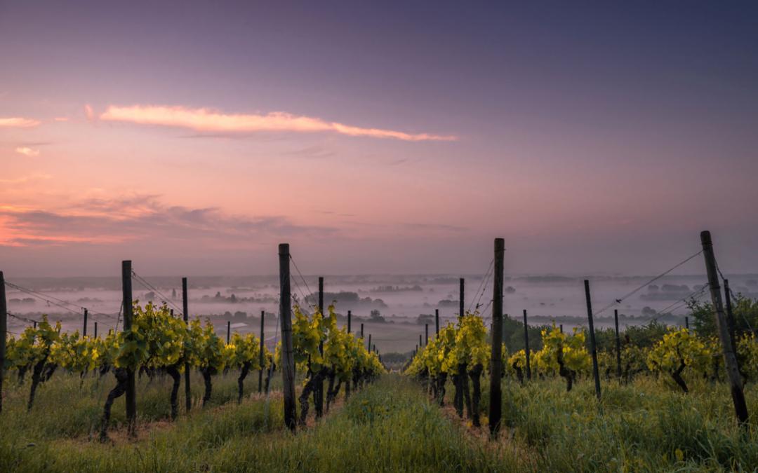 ¿Qué sabes sobre el vino ecológico?