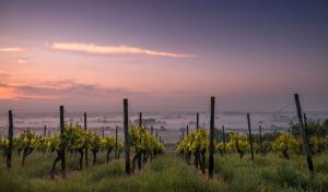 vino ecologico mosela